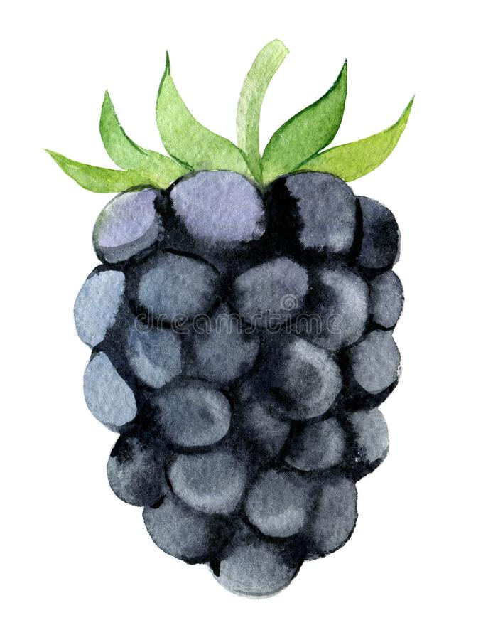 Blackberry isolated on white background, watercolor. Illustration stock illustration