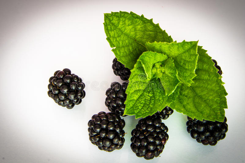 Blackberry 5 & mennica fotografia stock