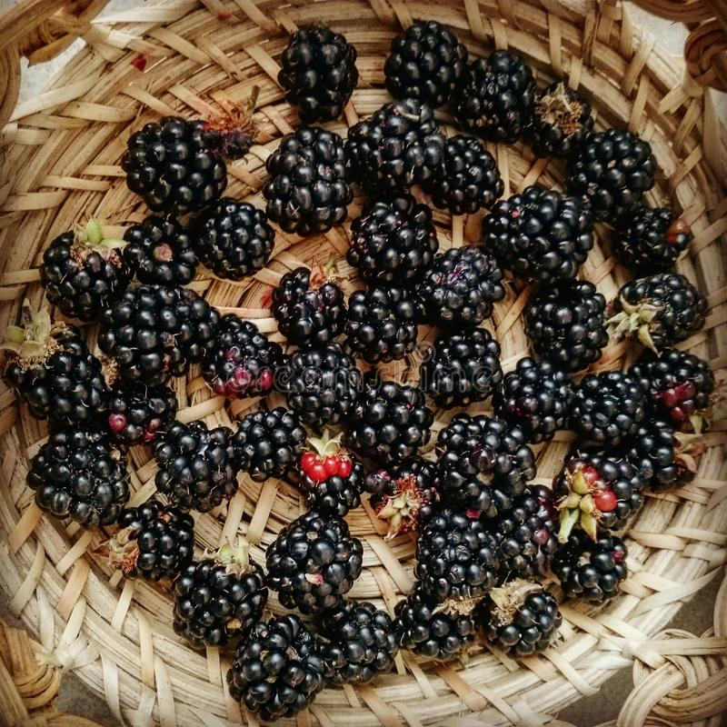 Blackberry na cesta foto de stock royalty free