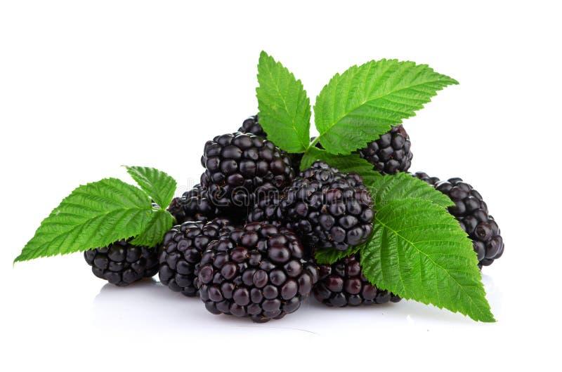 Blackberry odizolowywał na bielu zdjęcie stock