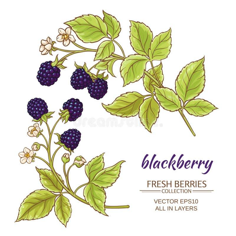 Blackberry vektoruppsättning stock illustrationer