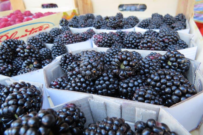 Blackberry, zarza, mora ártica foto de archivo libre de regalías