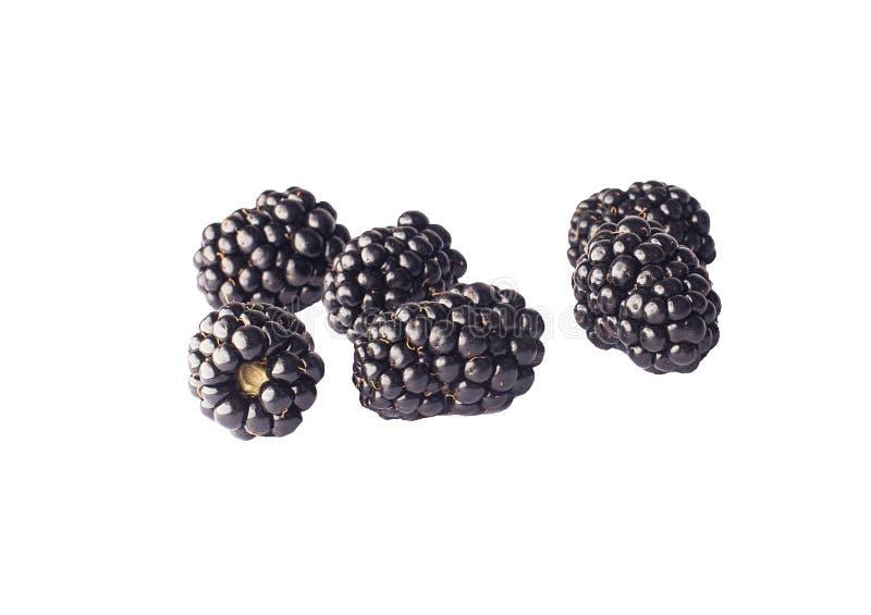 Blackberry, zarzamoras hermosas de la baya, zarzamoras en el fondo blanco foto de archivo