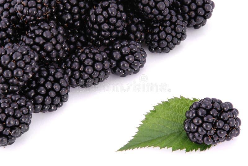 Blackberrys с листьями стоковое фото rf