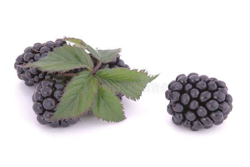 Blackberrys с листьями стоковое изображение