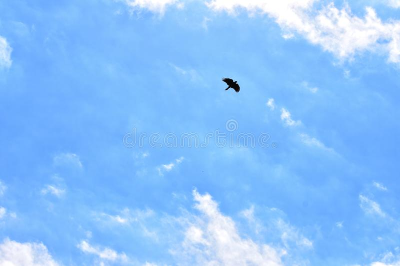 Blackbird Flying High In The Blue Sky stock photo