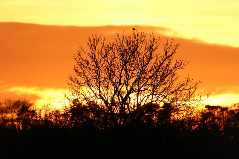Download Blackbird On Top  In December Sunset Stock Image - Image of silhouette, shade: 83708263