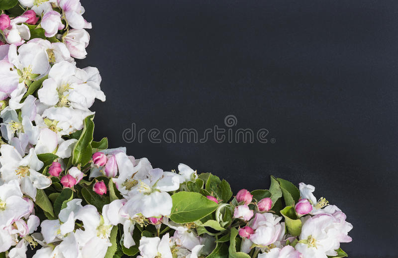 Blackboard decorated by apple flowers royalty free stock images