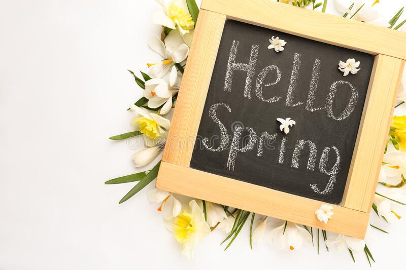 Blackboard with words HELLO SPRING and fresh flowers on white background, flat lay. Blackboard with words HELLO SPRING and fresh flowers on white background royalty free stock photos