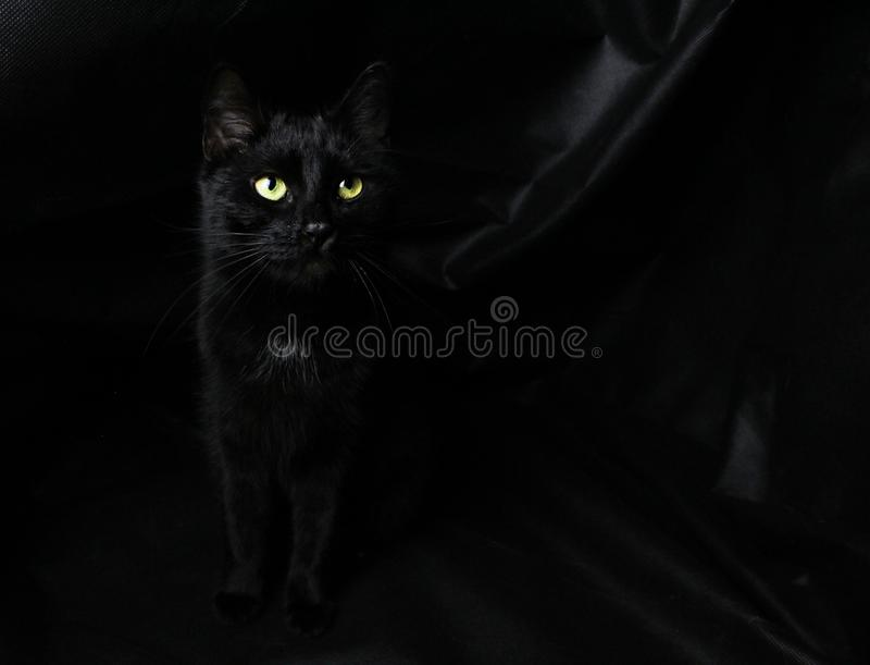 Blackcat στο μαύρο υπόβαθρο στοκ εικόνες