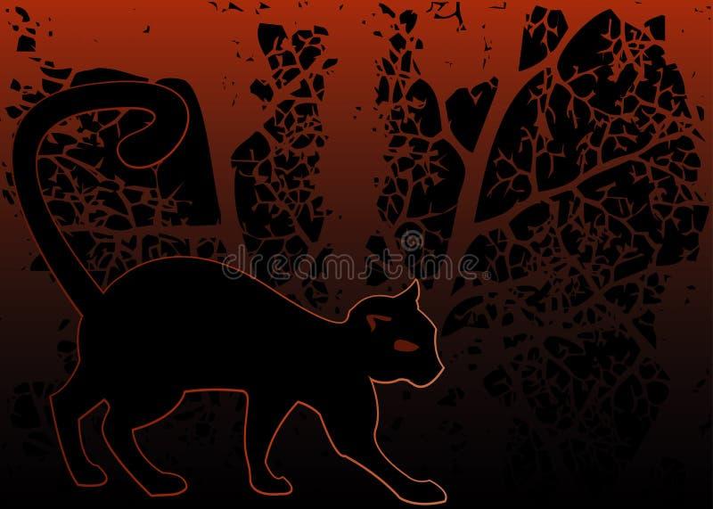 Blackcat stockfotografie
