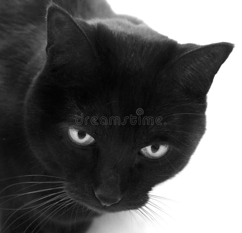 Blackcat imagem de stock royalty free