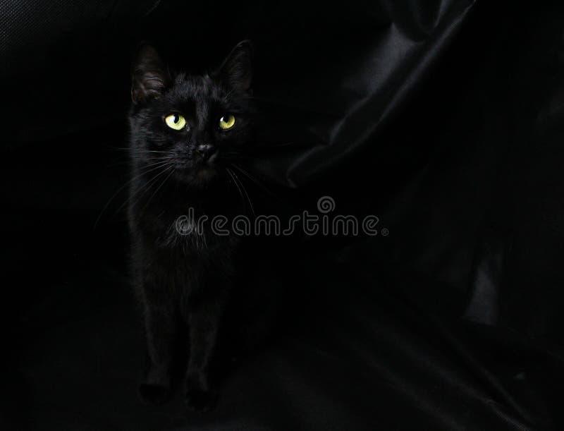 Blackcat au fond noir images stock