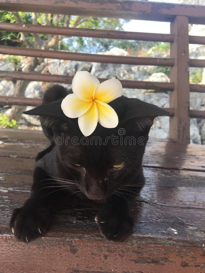 Blackcat cat flower chilling royalty free stock photo