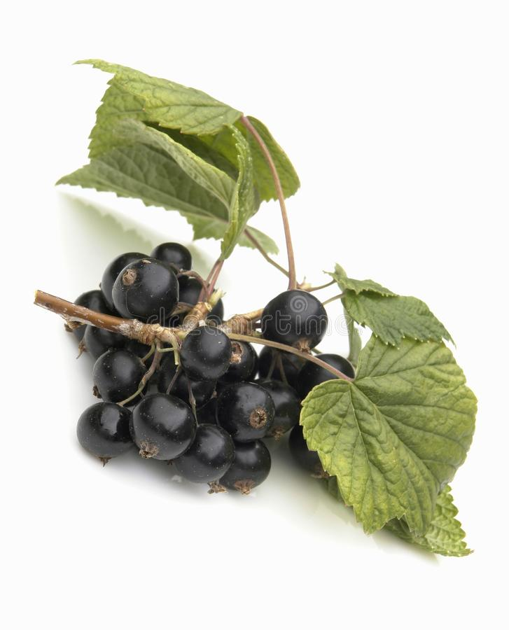 blackcurrant fotografia stock