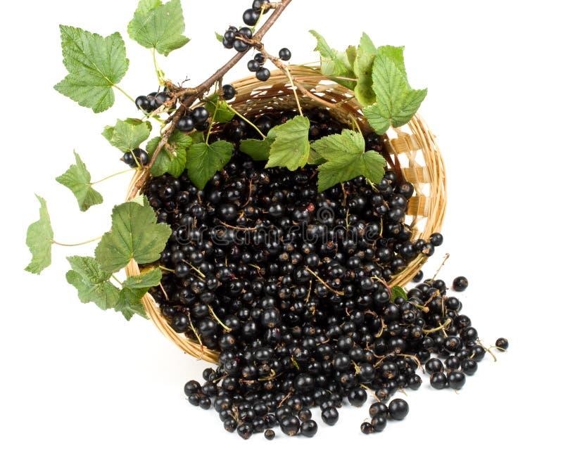 blackcurrant стоковое изображение