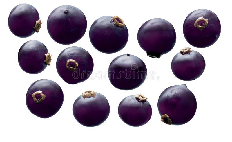 blackcurrant stock afbeeldingen