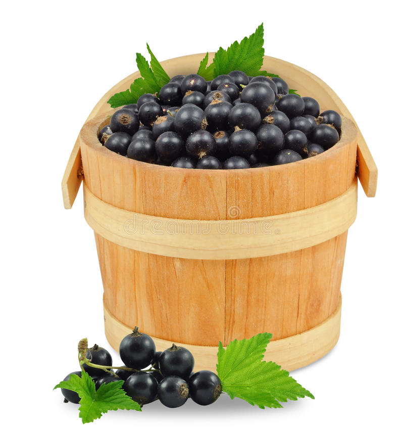 Blackcurrant in a bucket. Isolated on white stock photos