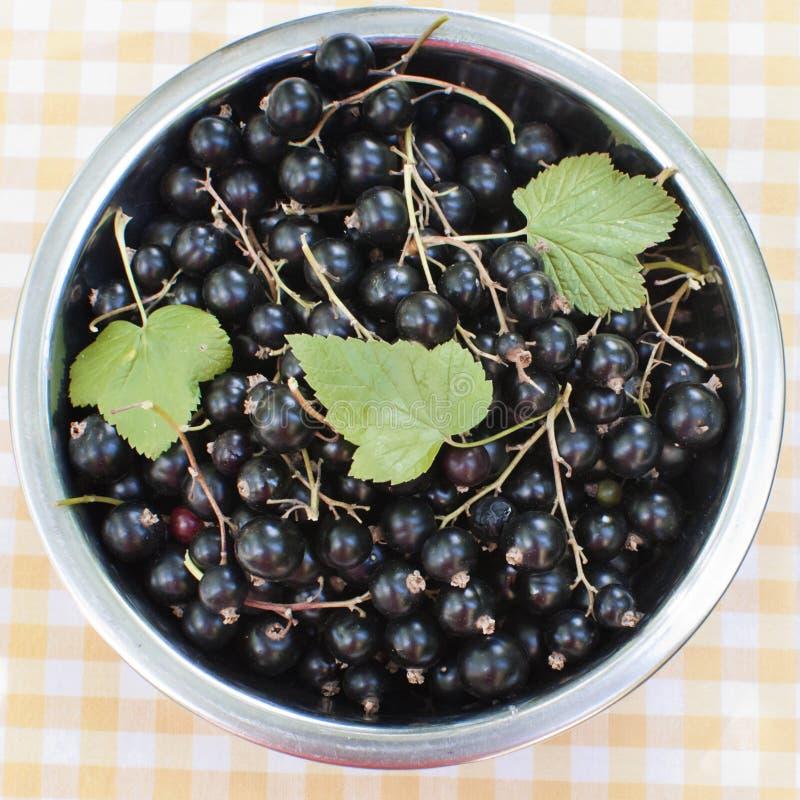 Blackcurrant in een kom stock afbeeldingen