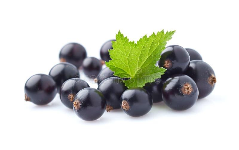 Blackcurrant jagody w zbliżeniu zdjęcie stock