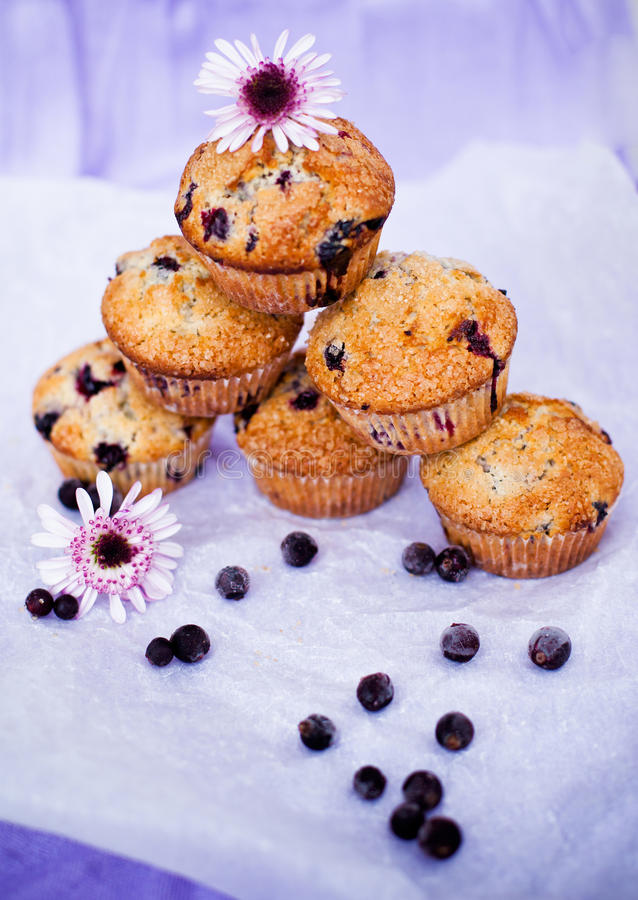 Blackcurrant muffins na stole obrazy royalty free