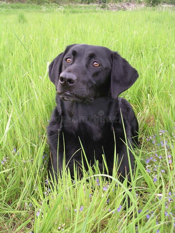 Blackdog.JPG royalty free stock image