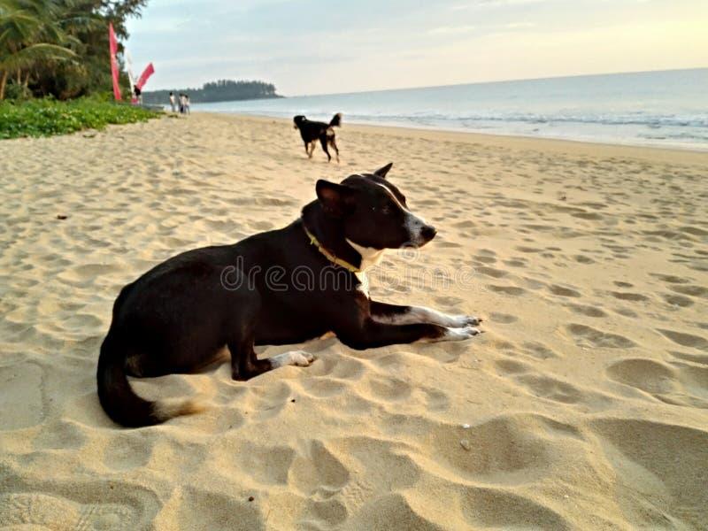 Blackdogs-Schauer auf dem Strand lizenzfreie stockfotos