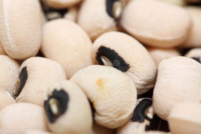 Blackeyed peas stock photos