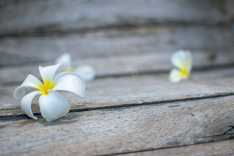 Blackground Flower&Wood stock afbeelding