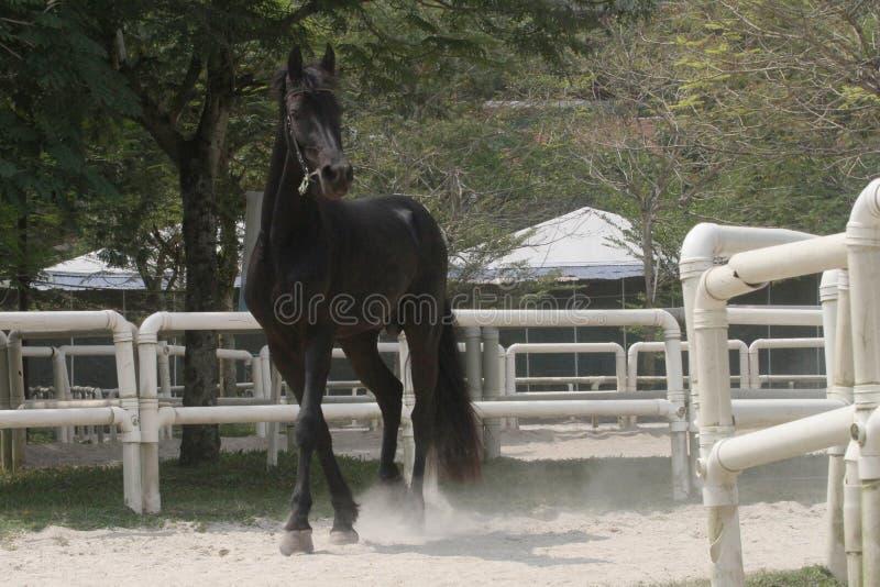 Blackhorse5 zdjęcia stock