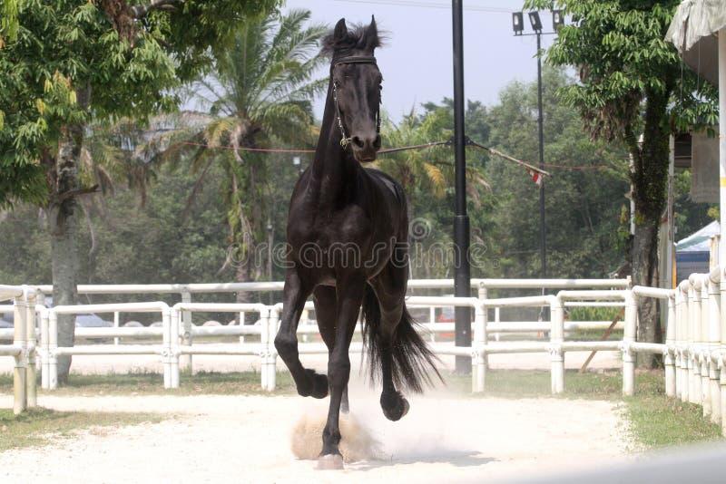 Blackhorse4 zdjęcia royalty free