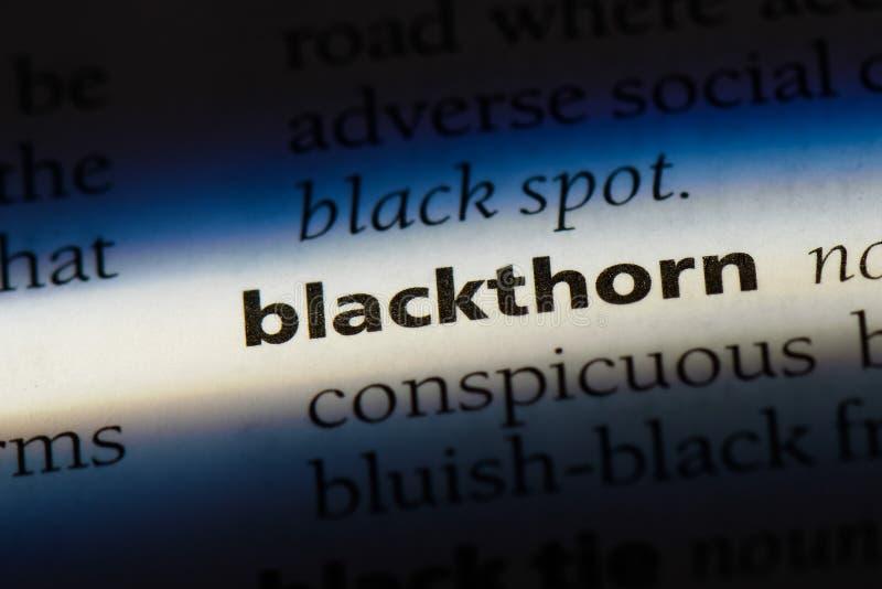 blacksnake στοκ φωτογραφία με δικαίωμα ελεύθερης χρήσης
