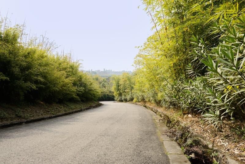 Blacktop de la ladera en bambú de la primavera soleada imágenes de archivo libres de regalías