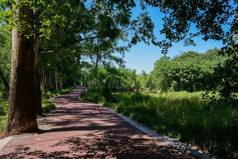 Blacktop de serpenteo de la orilla del lago en la sombra de árboles en el verano soleado d imágenes de archivo libres de regalías