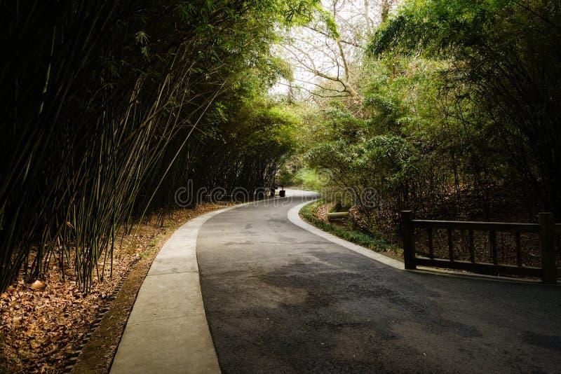 Blacktop sinuoso en bambú sombrío en día de primavera soleado fotos de archivo libres de regalías