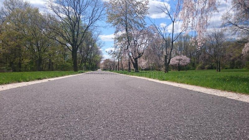 Blacktop y Cherry Blossom Trees imagenes de archivo