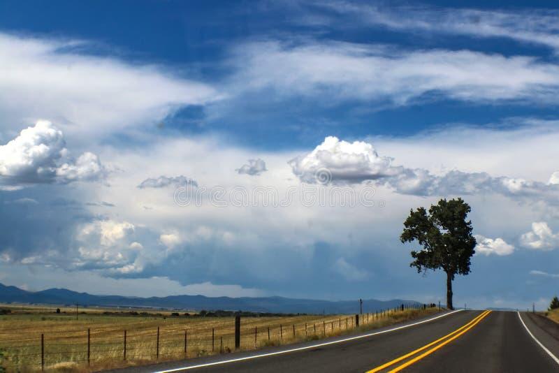 Blacktopped väg med ett träd på horisont och berg och regn på horisonten arkivfoto