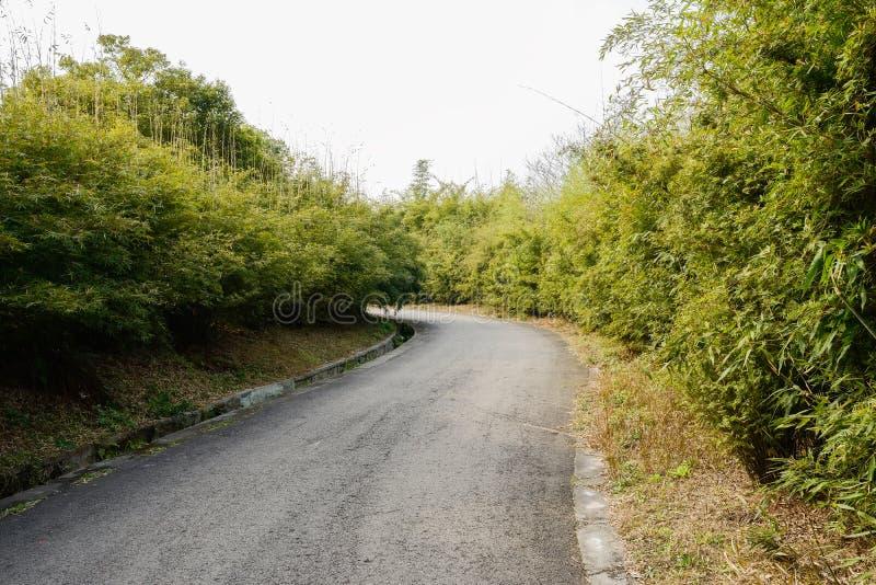 Blacktopväg i bambu och träd på solig vårdag royaltyfri fotografi