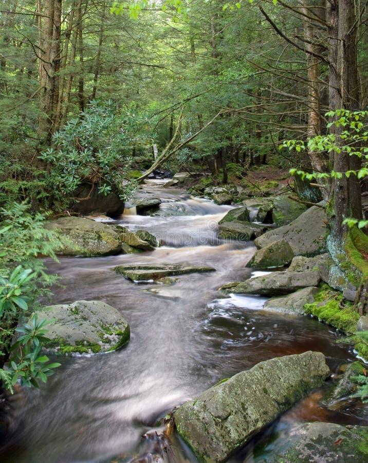 Blackwater Fluss-Westen Virginia lizenzfreies stockbild