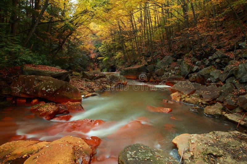 Blackwaterfluß im Wald stockfotografie