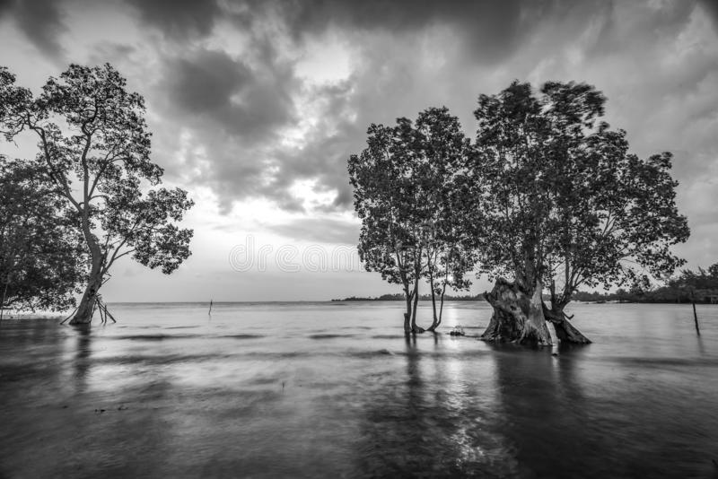 Blackwhite Photos landscape Wonderful Bintan Indonesia. Blackwhite Photos landscape Wonderful Bintan batam Indonesia stock photography