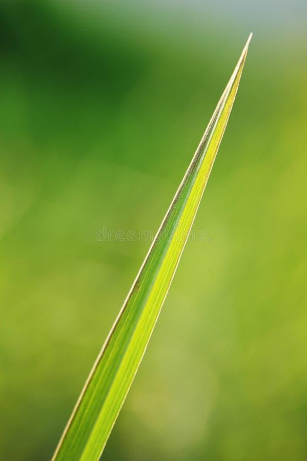 blad royaltyfri bild