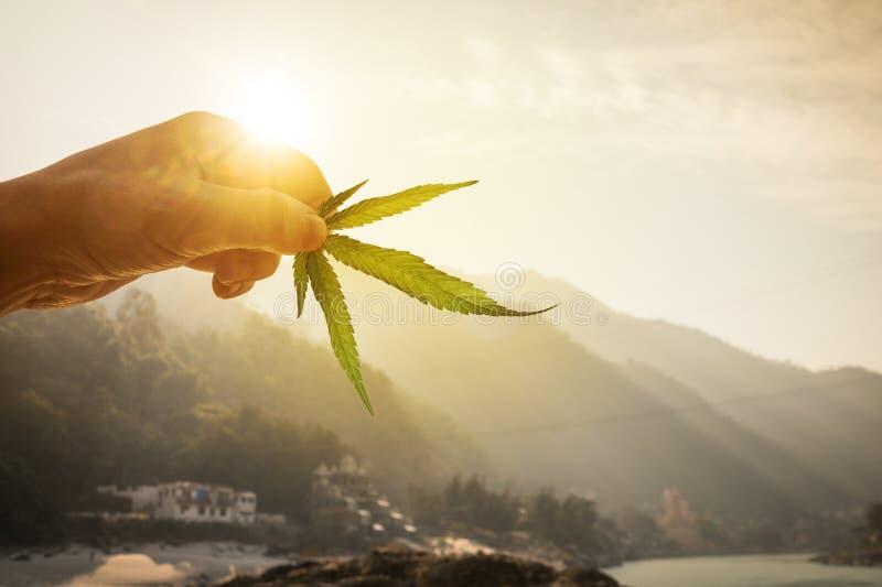 Blad av cannabis i handen i inställningssolen på suddig bakgrund arkivfoto