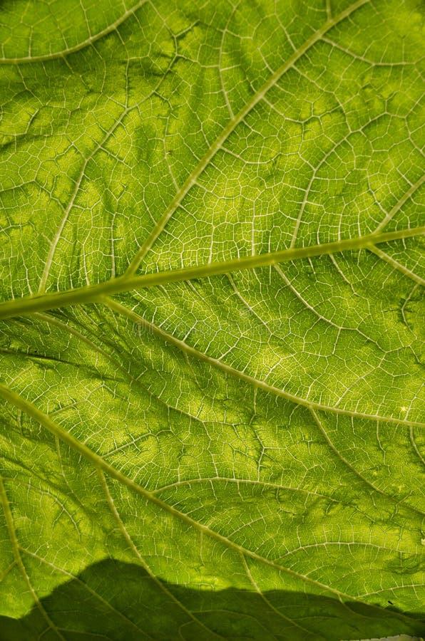 Blad av en växt arkivfoton