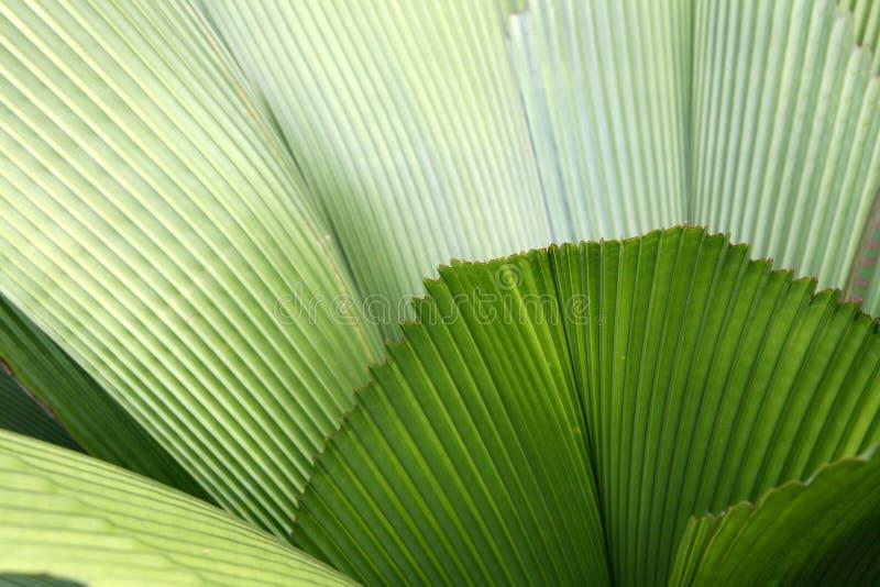 Blad - Botanische Tuinen, Singapore stock foto's