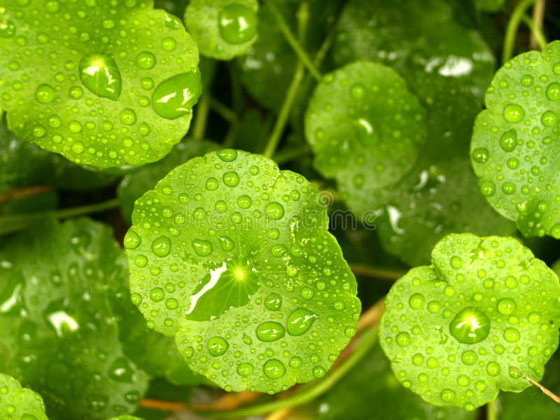 Blad en Water 11 royalty-vrije stock foto's