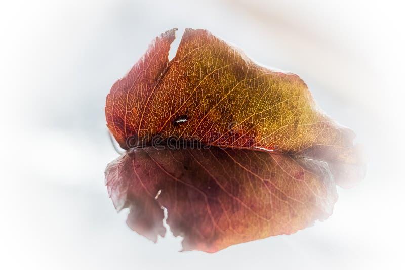 Blad - färger och detaljer arkivfoto