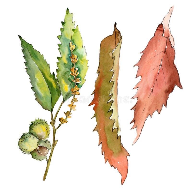 Blad för söt kastanj Blom- lövverk för bladväxtbotanisk trädgård royaltyfri illustrationer