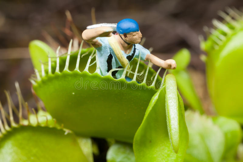 Blad för Venus flytrap som äter miniatyrdioramamannen arkivfoto
