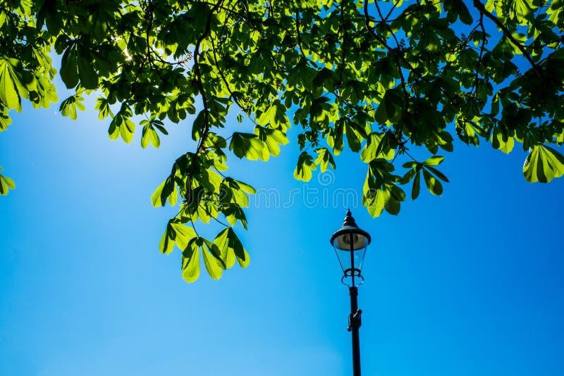 Blad från kastanjeträd och vacker blå himmel royaltyfri fotografi
